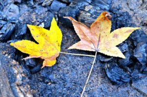 Ten Reasons I'm Excited About Fall